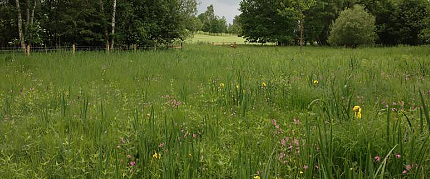 Moor Lane York Photograph Meadows